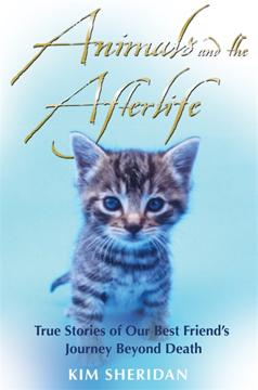 Bild på Animals And The Afterlife